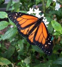 Butterfly wonderland | photo